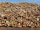 Loofhout  Stammen Beuken - Industrieel Hout, Zwarte Els, Standaard, Beuken, Berken