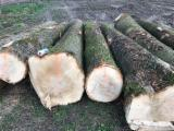 Forest And Logs Germany - ABC Brown / White Ash Saw Logs, diameter 30+ cm