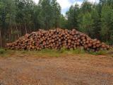 Laubrundholz  - Schnittholzstämme, Eukalyptus