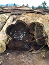 Forest And Logs Germany - Wenge Logs To Be Cut Into Boules