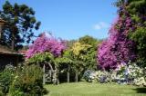 Šumsko Gazdinstvo Eucalyptus - Čile, Eucalyptus