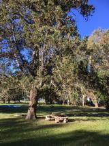 Waldgebiete Abarco - Argentinien Estanca Eukalyptushain, Magnolien