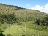 Лісисті Місцевості - Бразилія, Евкаліпт