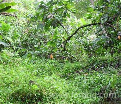 Abarco-Woodland