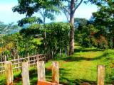 Waldgebiete - Costa Rica Farm 42 ha mit Mango, Papaya, davon 6 ha Wald