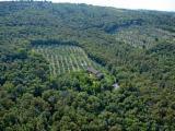 Waldgebiete - Italien Toskana Olivenhain mit 200 Bäumen