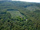 See Woodlands For Sale Worldwide. Buy Directly From Forest Owners - Olive Woodland from Italy 0,9 ha