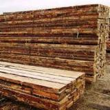 Forest and Logs - Saw Logs, Pine  - Scots Pine, Siberian Pine