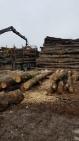 Firewood, Pellets And Residues - Acacia, Oak, Turkish Oak  Firewood/Woodlogs Cleaved -- mm