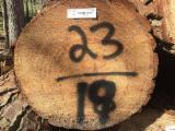 Meko Drvo  Trupci Za Prodaju - Za Rezanje (Furnira), Southern Yellow Pine