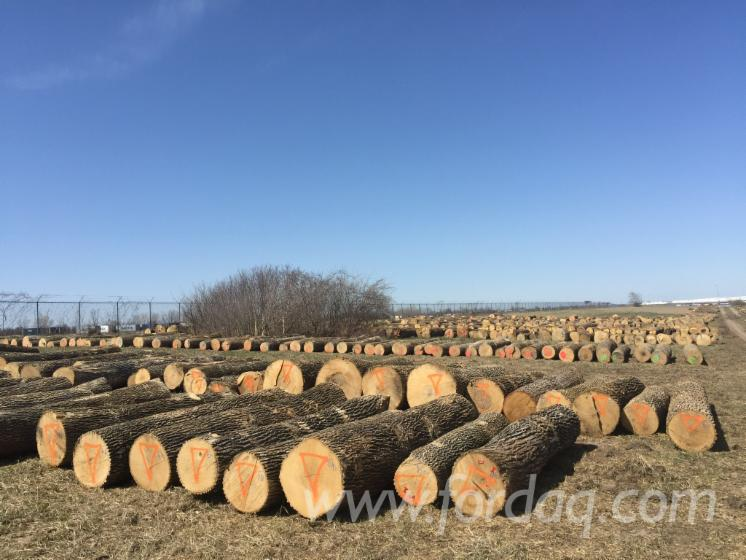 Ash--Red-And-White-Oak-Saw-Logs