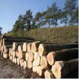 Drewno Liściaste Kłody Na Sprzedaż - Kłody Tartaczne, Jesion Amerykański