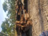 Gezaagd En Gelamineerd Hout Afrika - Kepers, Afrikaans Palissander, Machibi, Copal Van Rhodesië