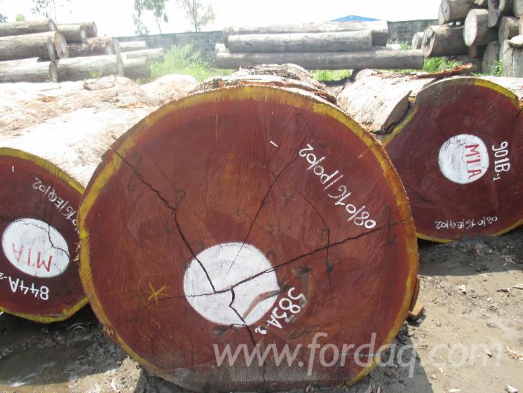 Vend-Grumes-De-Sciage-Sipo-R%C3%A9p-D%C3%A9m-Congo