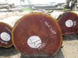 Hardwood  Logs - Fresh Cut Sipo Saw Logs, 70+ cm