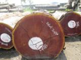 Drewno Liściaste Kłody Na Sprzedaż - Kłody Tartaczne, Sipo