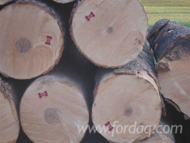 Best-quality-Hard-Maple-logs