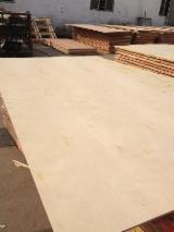 China - Fordaq Online market - Full birch plywood