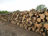 Foreste - legna spezzata a un metro di faggio e di cerro