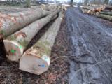 Belgium Hardwood Logs - White Ash Saw Logs, 30+ cm