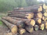 Hardwood  Logs - WHITE OAK LOGS