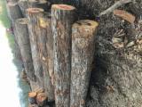 Wälder Und Rundholz Nordamerika - Schnittholzstämme, Eiche