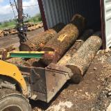 USA - Fordaq Online Markt - Schnittholzstämme, Esche, Roteiche, Eiche