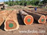 Iroko Hardwood Logs - Iroko Saw Logs , 50+ cm
