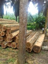 Trouvez tous les produits bois sur Fordaq - Vend Teak Costa Equateur