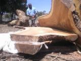 锯材及结构木材 北美洲 - 木梁, Saman