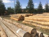 Turkey Softwood Logs - Turkish Cedar Logs