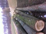 Furnierholz, Messerfurnierstämme, Esche , Buche, Roteiche