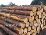 Ukraine Hardwood Logs - European - Cypress Saw Logs