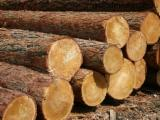 Belarus Softwood Logs - Pine  - Scots Pine 26 cm 1,2,3 Saw Logs Belarus