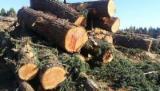 待售的成熟材 - 上Fordaq采购及销售活立木 - 喀麦隆, 毛帽柱木