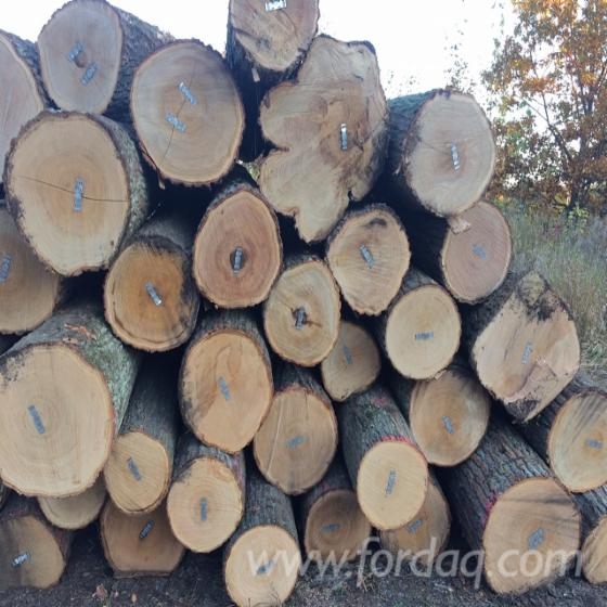 Offer of 2SC & 3SC Hardwood Saw Logs