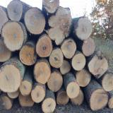 Wälder Und Rundholz Nordamerika - Schnittholzstämme, Hard Maple, Zuckerahorn, Roteiche, Eiche