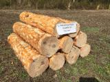 Find best timber supplies on Fordaq - Seaside Forest Products. Inc - Southern Yellow Pine Industrial Logs, 15-30 cm
