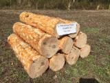 null - Stämme Für Die Industrie, Faserholz, Southern Yellow Pine