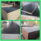 ISO 9000 Film Faced Plywood, 9-28 mm
