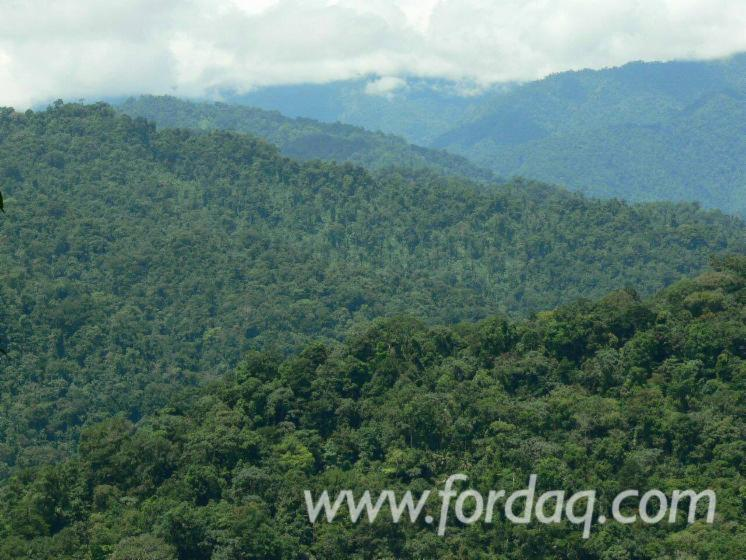 Woodland-from-Panama-5000
