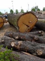 Hardwood Logs For Sale - Register And Contact Companies - 90 - 150 cm Oak Saw Logs Austria