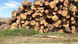 Russie - Fordaq marché - Vend Grumes De Sciage Chêne Ryazan Oblast