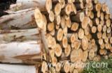 Hardwood Logs Suppliers and Buyers - Eucalyptus Logs 20 cm
