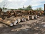 Hardwood Logs Suppliers and Buyers - 16+ in Yellow Poplar  Saw Logs from USA