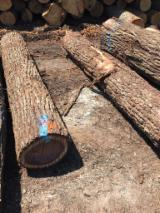 Hardwood  Logs - Saw Logs, Black Walnut