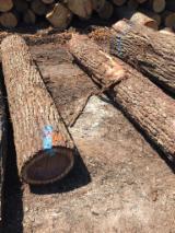Tvrdo Drvo  Trupci Za Prodaju - Za Rezanje, Crni Orah
