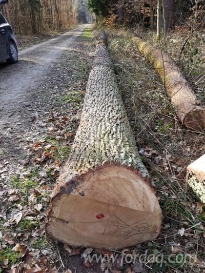 Oak-Saw-Logs