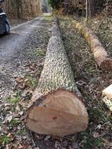 Hardwood  Logs For Sale - Oak Saw Logs, 30-100 cm