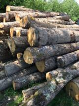 Latvia Supplies - Oak logs